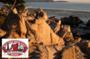 Monterey Carmel Tour and Golden Gate Bay Cruise